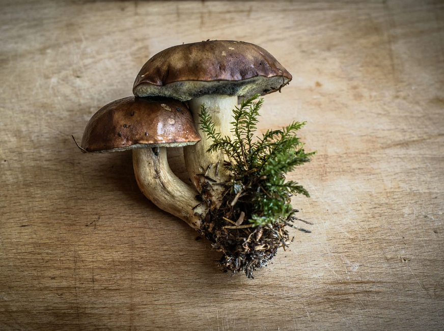 Buy Shrooms Online And Have Access To The Top Quality